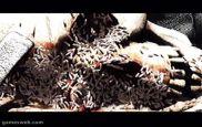Onimusha - Screenshots - Bild 6