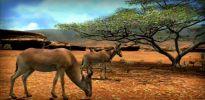 Afrika - Screenshots - Bild 4
