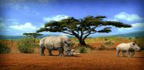 Afrika - Screenshots - Bild 3
