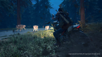 Days Gone - Screenshots - Bild 1